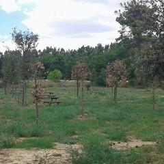 bosco 11