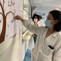 albero della vita- ospedale della Murgia