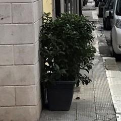 raccoglitori di rifiuti e fioriere sui marciapiedi