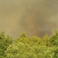 Incendio nel bosco