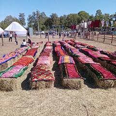 Moresca Nova: festival folk popolare Kazakistan
