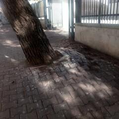 Albero via Tripoli