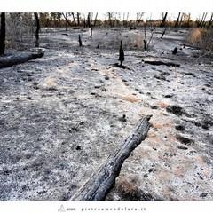 incendio bosco- reportage Piero Amendolara