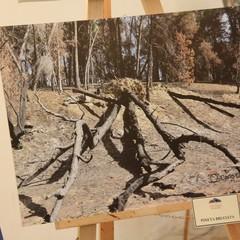 Mostra pittofotografica Gravina e il suo Bosco Difesa Grande - Speranza di una rinascita