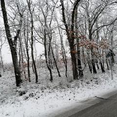 neve- bosco difesa grande