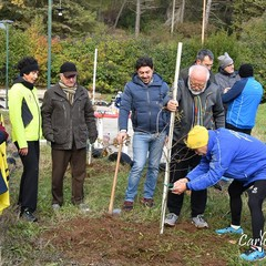 piantate querce al bosco