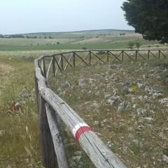 progetto path- parco Alta Murgia