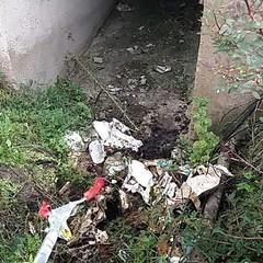 pulizia bosco 301218
