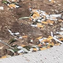 sigarette nei vasi