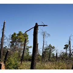 bosco difesa grande