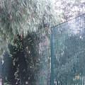 Caduta di un albero adiacente il parco giochi della pineta