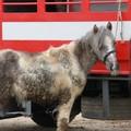 Fiera degli animali 2011