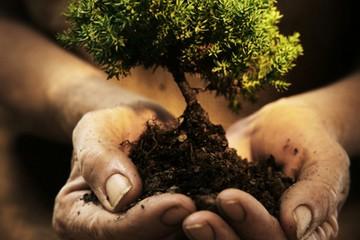 giornata dell'albero