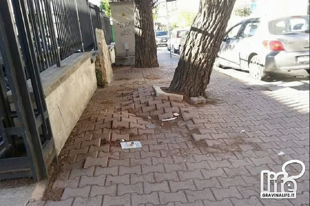Albero pericoloso in  via Tripoli