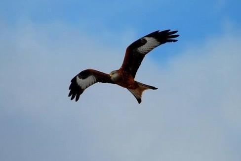 una giornata di birdwatching