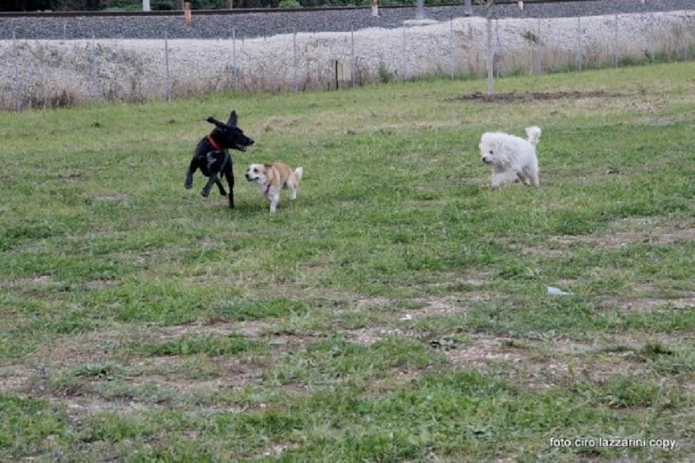 area sgambettamento cani
