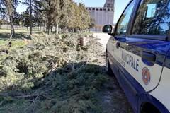 Il vento abbatte due alberi nei pressi di Gravina