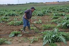 Hobbisti agricoli, monta il malcontento. A rischio le colture
