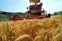 Puglia: aumentano le assegnazioni di gasolio agricolo