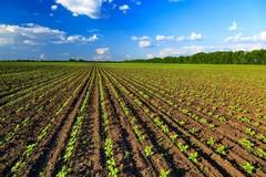 Fondi comunitari all'agricoltura, la Regione ammette i ritardi