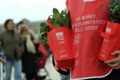 """Torna la """"Gardenia di AISM"""""""
