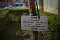 A Gravina trapiantato il primo albero della memoria