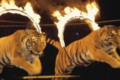 A Gravina circo con animali. Movimento 5 stelle: che fine ha fatto il divieto?