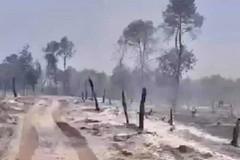 Incendio del bosco, cronaca di un disastro annunciato