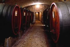Il Pier delle Vigne tra i vini d'eccellenza