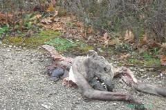 Animali avvelenati: Lega del cane a colloquio con le istituzioni