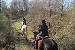 """Al via il progetto """"Bosco: Natura e Avventura - Scoprilo a piedi, in bici e a cavallo"""""""
