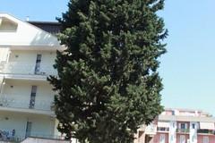 Bloccato l'abbattimento di un albero in Via Martiri dei Saraceni