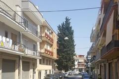 Cipresso di viale Martiri dei Saraceni: martedì 26 settembre se ne parla in Comune