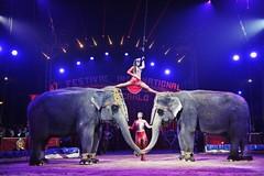 """Non più circo con animali a Gravina"""