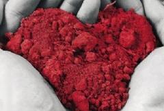 Un volto della solidarietà: la donazione degli organi