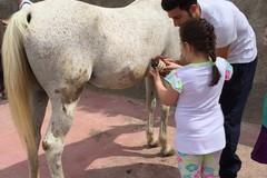 Interventi assistiti con gli animali: Consiglio regionale approva legge
