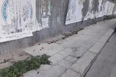 """Deiezioni canine in via Picasso: """"si salvi chi può"""""""