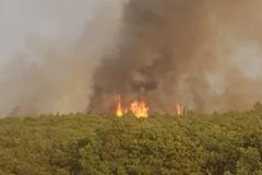 Quarto giorno di fuoco nel bosco, è un disastro