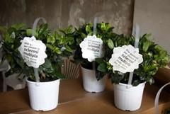 Una gardenia contro la sclerosi multipla