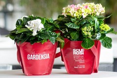 """Torna a Gravina """"Gardensia"""" di AISM"""