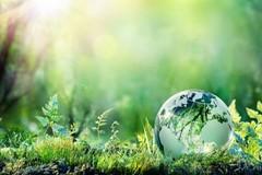Iniziative rinviate per la giornata mondiale dell'ambiente