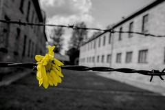Le iniziative del Comune per la Giornata della memoria