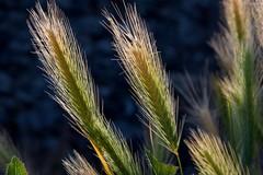 Pazza estate, agricoltura in ginocchio