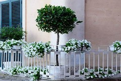 """Arriva la terza edizione di """"Balconi fioriti"""" ed è subito polemica"""