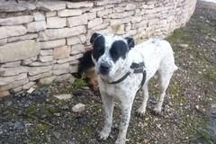 Cane abbandonato a Borgo Dolcecanto