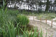 Vivaio comunale: affidata all'Università di Bari la manutenzione straordinaria del giardino botanico