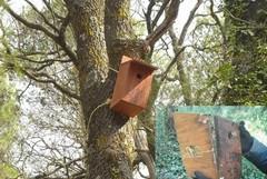 Bosco Difesa Grande: vandali distruggono cassette nido