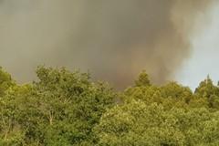 Bosco in fiamme, arrivano rinforzi da altre regioni