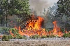 Incendio al Bosco: l'amministrazione comunale risponde alle opposizioni