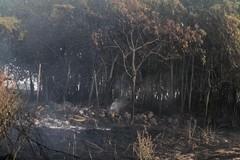 Incendi: Coldiretti Puglia, c'è la mano dei piromani in 6 roghi su 10